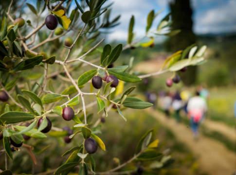 camminata tra gli olivi